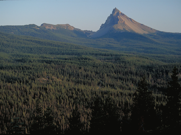 A deep green forest stretches out to the horizon, where a sharp peak leers like a dagger point.